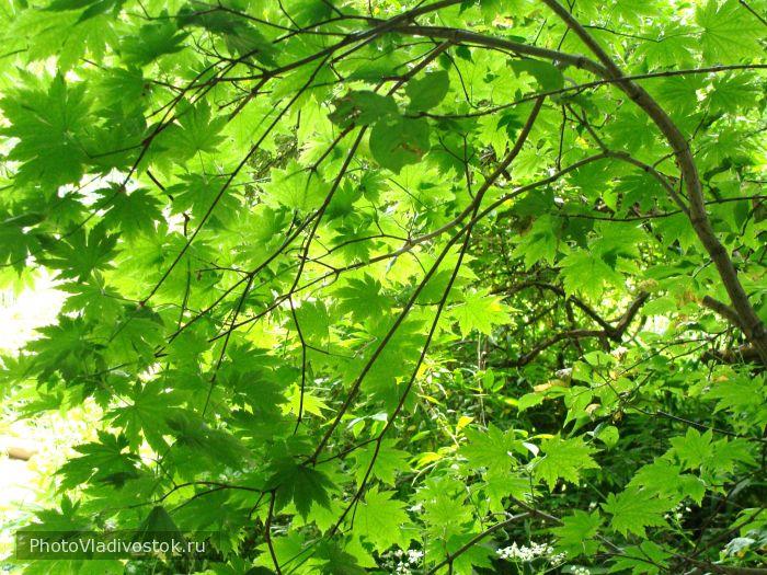 Утро в ботаническом саду. Природа. Фотографии Владивостока