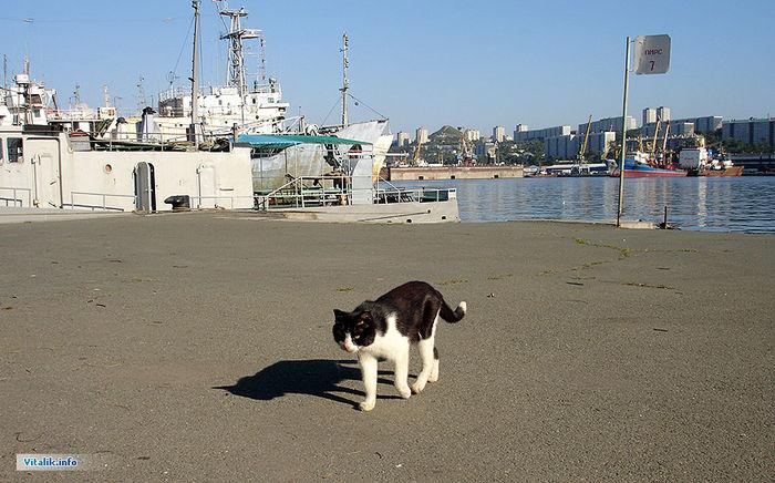 Портовая кошка. 43-й причал, 22 августа 2005. Животные. Фотографии Владивостока