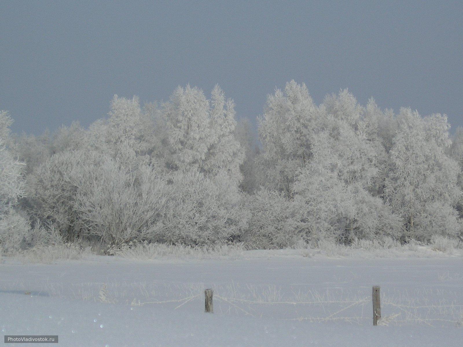 иней. Природа. Фотографии Владивостока