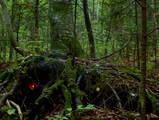 Дом лешего. Природа. Фотографии Владивостока
