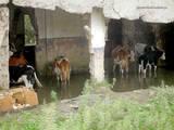 Крытый бассейн для коров, бухта Козьмино, 29 июля 2008