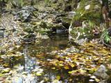 Осенний ручей. Природа. Фотографии Владивостока